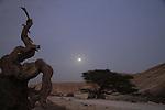 Israel, Negev, moonrise Nahal Barak