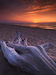Driftwood on a shore of lake Huron with beautiful red sunset over it, summertime nature landscape scenery. Pinery Provincial Park, Ontario, Canada.