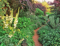 "Path in ""Perenial Border"".Bellevue Botanical Garden, Bellevue, Washington"