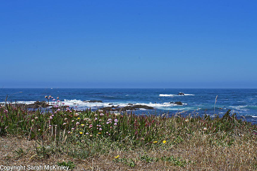 Seathrift and ice plant grow on the edge of a bluff overlooking the deep blue water of the Pacific Ocean at MacKerricher State Park near Fort Bragg in Mendocino County in Northern California.