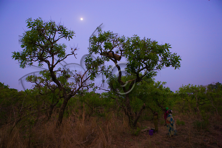 Joseph and his wife, who live in the bush, get ready to gather the honey from one of their hives set in a tree.