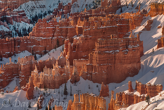 730750045a winter snow lays a fine dusting of white on the sandstone hoodoos turned golden and red by the morning sun in bryce canyon national park utah