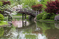 65021-03605 Bridge in Japanese Garden in spring, MO Botanical Gardens, St Louis, MO