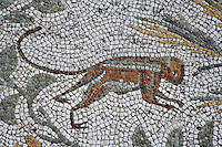 Detail of a mosaic of a monkey in the Villa of the Aviary, Carthage, Tunisia, pictured on January 27, 2008, at noon. Carthage was founded in 814 BC by the Phoenicians who fought three Punic Wars against the Romans over this immensely important Mediterranean harbour. The Romans finally conquered the city in 146 BC. Subsequently it was conquered by the Vandals and the Byzantine Empire. Today it is a UNESCO World Heritage. The Roman Villa of the Aviary, with its octagonal garden set in a peristyle courtyard, is known for its fine mosaics depicting birds. Picture by Manuel Cohen.