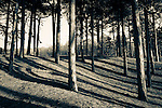 140107_Formby Point
