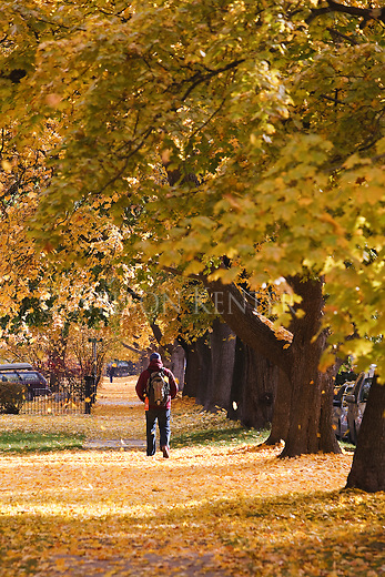 Freshly fallen leaves cover the ground in the University neighborhood of Missoula, Montana