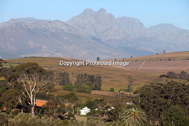 Vingards landskap i Stellensbosch utanfor Kapstaden, Sydafrika. Foto: Per-Anders Pettersson
