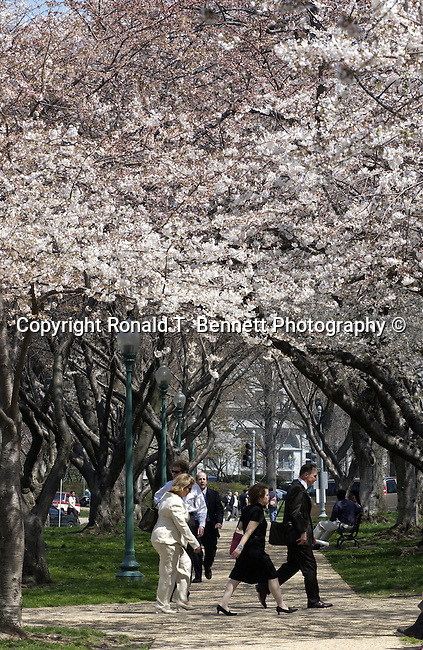 Government employees walking on a nice spring day with Cherry blossoms Capitol Hill Washington D.C.,  Washington DC, Politics in the United States, Presidential, Federal Republic, united States Congress, Fine Art Photography by Ron Bennett, Fine Art, Fine Art photo, Art Photography,