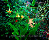 Tom Mackie, FLOWERS, photos, The Exotic Garden, Norwich, Norfolk, England, GBTM050289-1,#F# Garten, jardín
