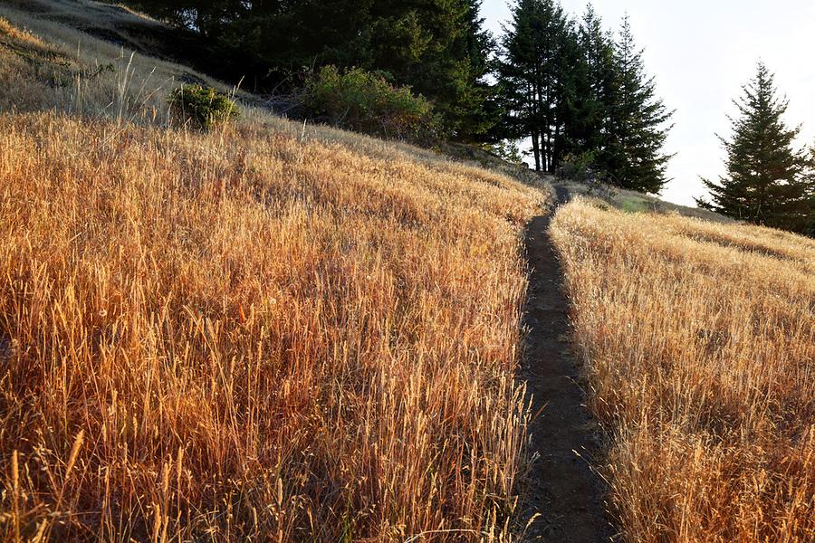 Trail through grassy meadow on Turtleback Mountain, Orcas Island, Washington, USA