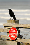 Kalaloch beach. Split log fence with blackbird with stop sign