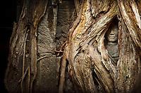 Siem Reap, Angkor, Angkor Vat, temples d'Angkor, Angkor Temple, Cambodge, Cambodia