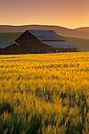 Golden sunrise light over barn and field in the Tassajara Region, Contra Costa County, California