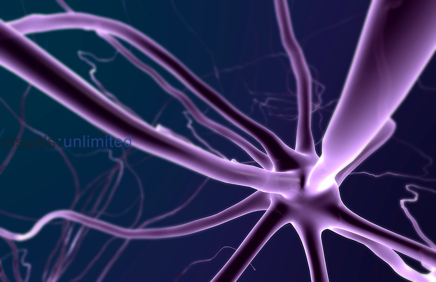 A microscopic view of neurons and their processes. Royalty Free