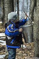 Little boy opening lid of sugar maple sap bucket
