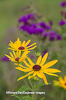 63899-05417 Sweet Black-eyed Susan (Rudbeckia subtomentosa) and Missouri Ironweed (Vernonia missurica) Marion Co., IL