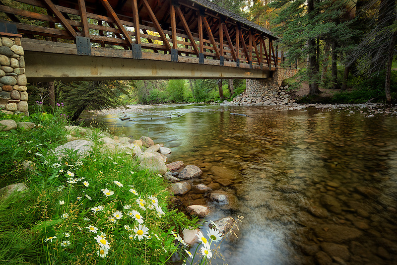Covered footbridge and daisy flowers with Gore Creek. Gerald ford Park. Vail, Colorado