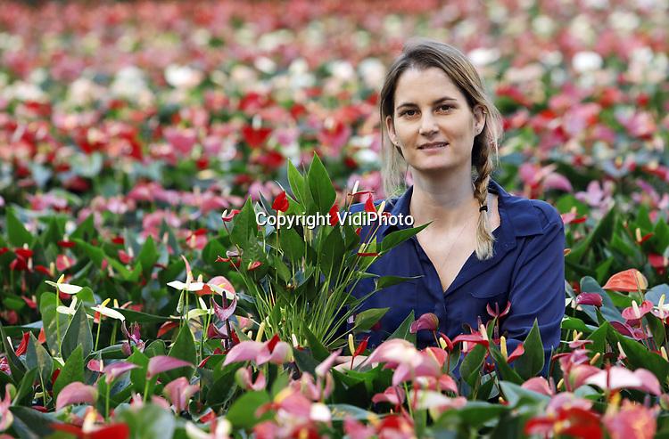Foto: VidiPhoto<br /> <br /> BEMMEL – Drukte voor Valentijn bij Karma Plants in tuinbouwgebied Next Garden (Bergerden) in Bemmel. In lange, kleurige rijen staan 14 soorten in verschillende kleuren en potmaten klaar om via de bloemenveiligingen te vertrekken naar heel Europa. Negen soorten zijn zo exclusief dat alleen Karma ze levert. Marketingmanager Lydia Langelaan is bezig om het oubollige imago van de anthurium frisser en meer trendy in de markt te zetten.