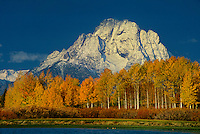 749450261 aspens populus tremuloides in brillant yellow and orange line the snake river at oxbow bend with mount moran in the background grand tetons national park wyoming