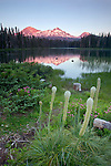 Bear grass (Xerophyllum tenax) blooms along Scott Lake with views of the Three Sisters in the distance in Oregon, USA