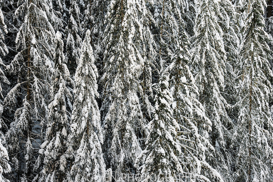 Forest, winter, Washington