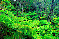 The lush tropical rain forests of the big island of Hawaii with it's diverse array of botanical species.