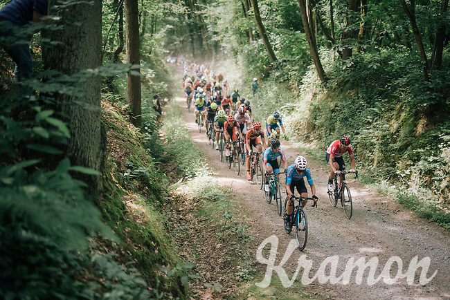 when a road peloton hits the forest gravel...<br /> <br /> 3rd Dwars Door Het hageland 2018 (BEL)<br /> 1 day race:  Aarschot > Diest: 198km