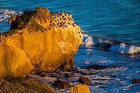 Hound Dog Rock