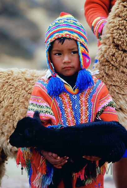 Peruvian boy carries black lamb, Peru, South America