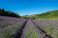 Lavender fields/winery