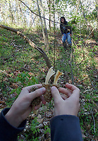 NWA Democrat-Gazette/FLIP PUTTHOFF <br /> D.J. shows his mom April 15 2019 a morel he found with two stems.