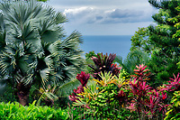 Tropical foliage and ocean. Garden of Eden  Botanical Garden Maui, Hawaii