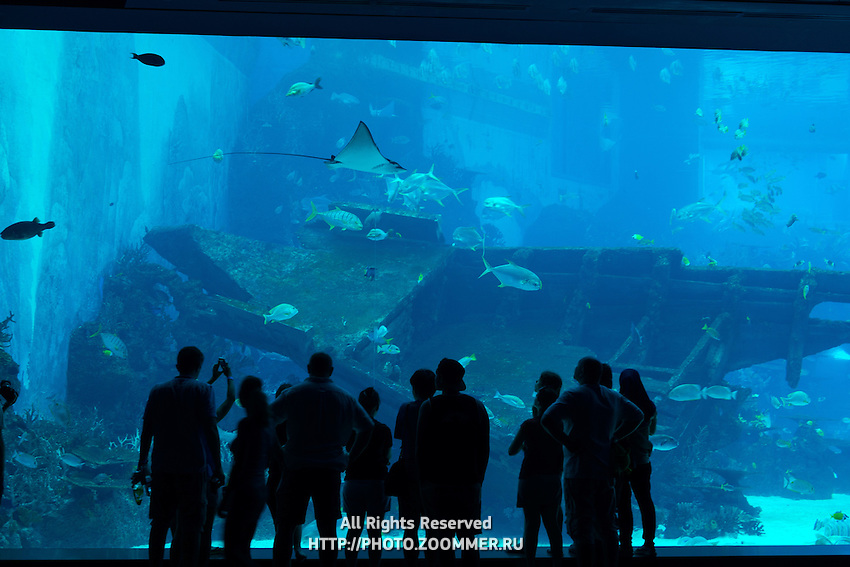 Silhouette of people in front of huge aquarium with stingray and fishes on Sentosa island, Singapore