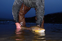 Atlantic Salmon Catch and Release Fly Fishing in Iceland. 10 pound female caught in Litlifoss pool, Svalbardsa river Thistilfjordur