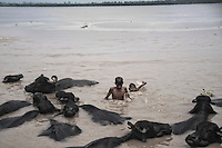 Young children bathing alongside the buffaloes in the Ganges river at Jajmau in Kanpur, Uttar Pradesh, India. Arindam Mukherjee
