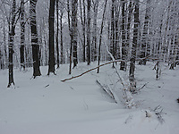 FOREST_LOCATION_90168