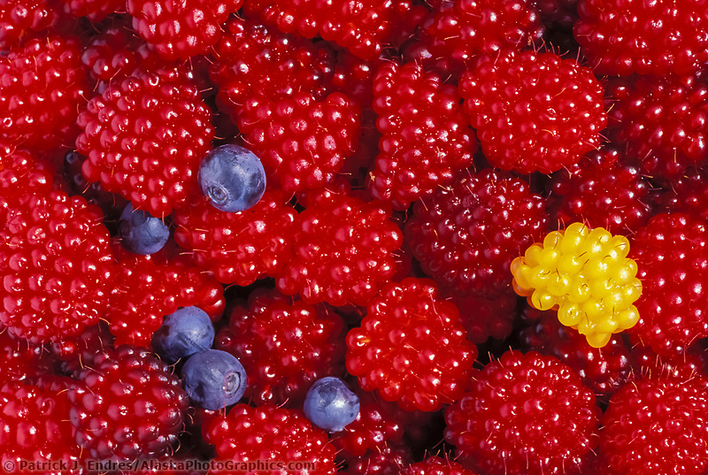 Ripe red salmonberries, blueberries, Cordova, Alaska