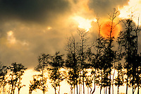 Sunset Hawaii- Orange ball of sun goes down behind a row of trees as light breaks through dark clouds