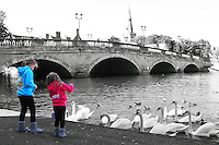 Bedford, UK - Feeding the swans by Town Bridge -  A selection of views of the county town of Bedford, England - 15th September 2012..Photo by Keith Mayhew