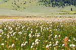 Wildflowers in the Copper Basin in Idaho near Sun Valley
