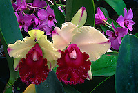 Memoria Anna Balmores Convex<br />
