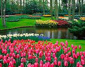 Tom Mackie, FLOWERS, photos, Keukenhof Gardens, Lisse, Holland, GBTM990372-2,#F# Garten, jardín