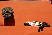 Sleeping cat at the Museo Frida Kahlo, also known as the Casa Azul, or Blue House, Coyoacan, Mexico City