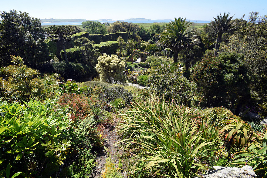 TRESCO ABBEY GARDENS, ISLES OF SCILLY. A CROSS SECTION SHOWS THE IMPORTANCE OF HEDGING AND SHELTER BELTS TO THE GARDEN. IN THE FOREGROUND ARE THE ALMOST SUB TROPICAL PLANTS OF THE GARDENS PROTECTED BY GIANT HEDGES (TO THE LEFT) AND THE TALL TREES OF THE SHELTER BELT (BEHIND). BEYOND THAT IS THE COMPARATIVELY BARREN NATURAL SCILLIES HABITAT AND BEYOND THAT THE SEA AND OTHER ISLANDS. 20/06/2015.  PHOTOGRAPHER CLARE KENDALL.