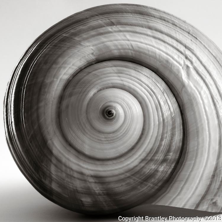 Black and white fine art sea shell photography