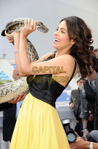 MALLIKA SHERAWAT.attending the 'Hiss' Photocall at the Salon Martha Barriere, the Majestic Hotel  during the 63rd Annual Cannes International Film Festival in Cannes, France, May 16th, 2010..half length black yellow dress holding snake profile side .CAP/CAS.©Bob Cass/Capital Pictures.