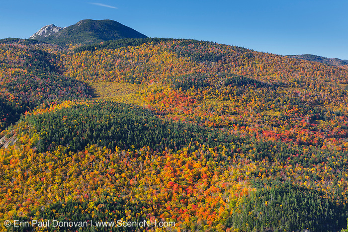 Autumn foliage from the Boulder Loop Trail. This trail is located off of the Kancamagus Highway (route 112) in the White Mountains, New Hampshire USA. Mount Chocorua is in the distance.
