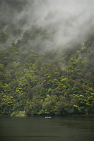 Kayakers in rain in Doubtful Sound, Fiordland National Park, UNESCO World Heritage Area, Southland, New Zealand, NZ
