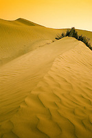 The Taklamakan Desert in the Xinjiang Uyghur Autonomous Region in the northwest of China, is the world's second largest shifting sand desert with about 85% is made up of shifting sand dunes. The northern and southern borders of the desert are dotted with oasis towns that supported the ancient Silk Road.