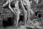 Ta Prohm Roots And Stone 13 - Silk-cotton tree roots growing over the inner enclosure Western gallery, Ta Prohm Temple, Angkor, Cambodia